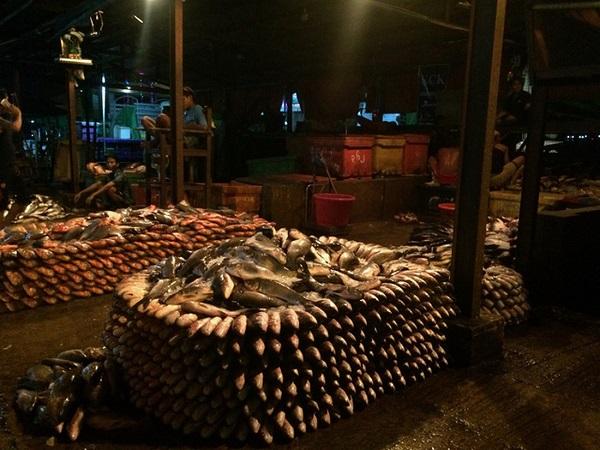 Những con hàng cá tươi rói được xếp đẹp mắt để khách mua sỉ - Ảnh: Bông Mai