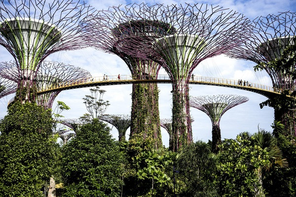 Gardens by the Bay - Ảnh: Suzanne Lee