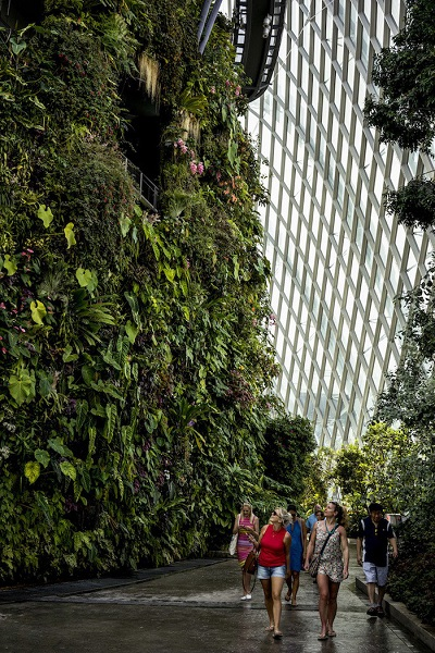 Cloud Forest ở Gardens by the Bay - Ảnh: Suzanne Lee