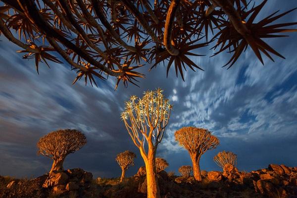 Bình minh ở rừng cây Quiver - Ảnh: Ian Plant