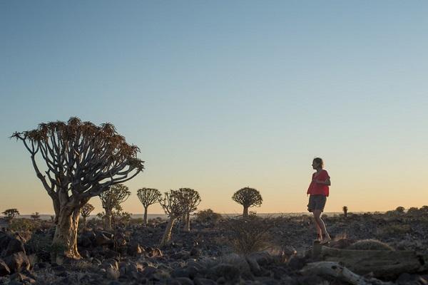 Rừng cây Quiver - Ảnh: Ian Plant