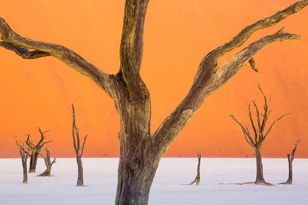 Những bộ xương cây khô ở Deadvlei - Ảnh: Ian Plant