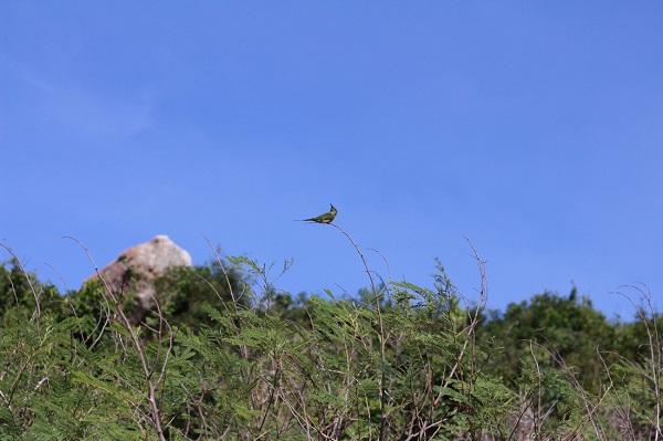 Trên đường tới hải đăng Hòn Lớn, tiếng chim ca ríu rít sẽ thỏa lòng ước nguyện của người yêu thiên nhiên - Ảnh: Bông Mai