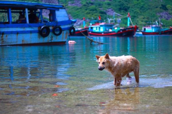 Những chú chó ở xã Bích Đầm được nghịch nước biển mà không phải chú chó nào cũng có cơ hội - Ảnh: Bông Mai  Hiện nay Bích Đầm chỉ có khoảng 174 hộ gia đình với gần 1000 người sinh sống, gắn bó cuộc đời mình vào biển cả bằng các nghề đánh bắt và nuôi trồng thủy sản.