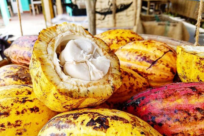 Đến đây, ngoài việc ngồi thuyền khám phá sông nước, bạn có thể ghé các vườn trái cây, thưởng thức các món ăn đặc sản...