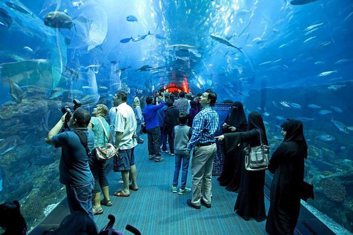 Thủy cung Aquarium ở Dubai - Ảnh: Dương Quán Hạ