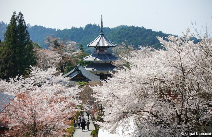Yoshinoyama (Núi Yoshino) - Ảnh: Kanpai