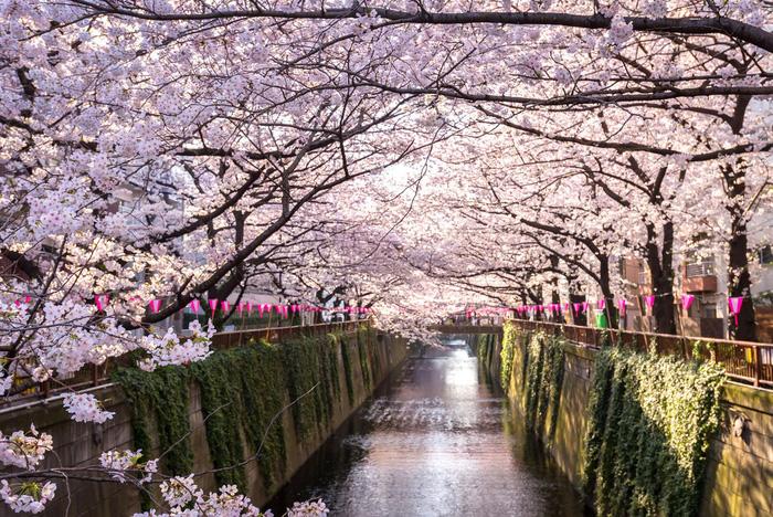 Sông Meguro - Ảnh: FAST JAPAN