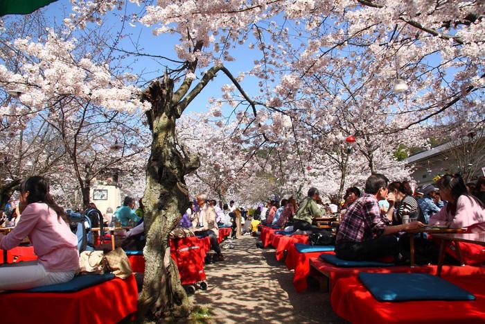 Công viên Maruyama - Ảnh: FAST JAPAN
