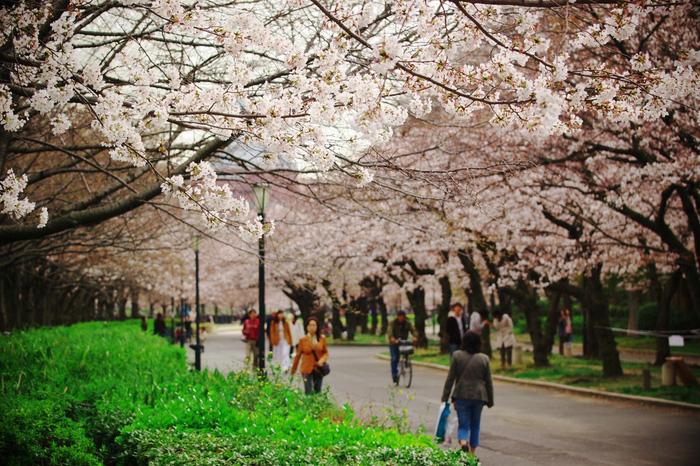 Công viên Kema Sakuranomiya - Ảnh: Justgola