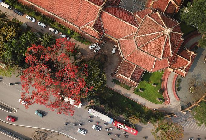 Nếu là người dân thị thành, không muốn đi xa thì những ngày này, người yêu hoa có thể ghé qua góc đường chạy ngang Bảo tàng Lịch sử Việt Nam. Một màu đỏ sặc sỡ đang bao trùm một góc phố, khiến ai đi ngang qua cũng phải ghé nhìn.