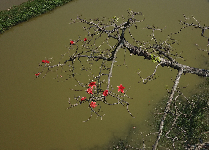 Hoa gạo hay còn gọi là hoa mộc miên, thường trồng nhiều ở miền Bắc, mỗi năm hoa chỉ nở một lần vào khoảng tháng 3 dương lịch. Một trong những địa điểm nổi tiếng nhất để chụp ảnh hoa gạo chính là hàng cây ở thôn Đoan Nữ thuộc xã An Mỹ, huyện Mỹ Đức, Hà Nội.