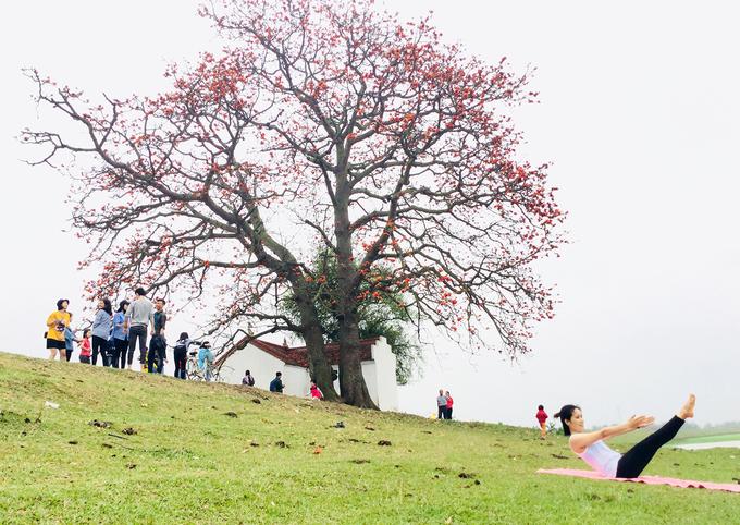 Miếu Bà Cô nằm ở địa phận làng Đông Loan, xã Lãng Sơn, huyện Yên Dũng, Bắc Giang, trên bờ đê sông Thương cũng được nhiều người yêu hoa tìm tới mỗi độ tháng 3.