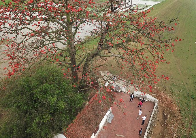 Hai cây gạo cổ thụ trổ bông đỏ rực rỡ, sà bóng bên mái ngói, in hình xuống dòng sông trở thành hình ảnh kinh điển khi nhắc tới làng quê Bắc Bộ.