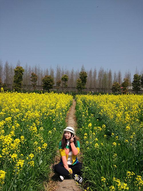 Hoa cải vàng: Cuối tháng 3 đến tháng 4 ở trấn Trang Hành, quận Phụng Hiền ngoại ô Thượng Hải diễn ra Lễ hội hoa cải Phụng Hiền. Du khách đến tham quan hoàn toàn miễn phí, nhưng địa điểm cách trung tâm thành phố khá xa nên việc đi lại cũng tốn kha khá thời gian. Bạn có thể kết hợp đi tham quan Phim trường Thượng Hải vì cùng nằm trên tuyến đường đến Trang Hành.