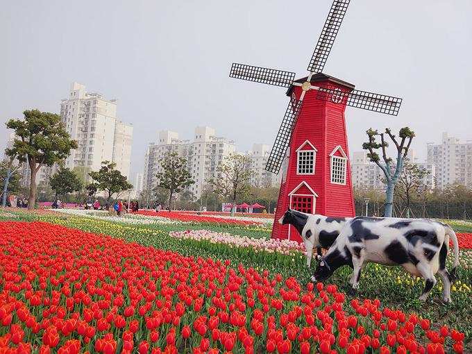 Hoa tulip: Được trồng nhiều nhất ở công viên Đại Ninh. Thường niên, vào tháng 4 tại công viên này sẽ tổ chức lễ hội hoa Tulip.