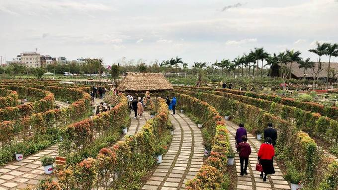Khoảng 12.000 cây hồng lộc có nguồn gốc từ Bến Tre được trồng để làm nên mê cung này. Loại cây này thường được dùng làm cây cảnh, có lá non màu đỏ, hoa màu trắng, cao từ 0,8-2m.