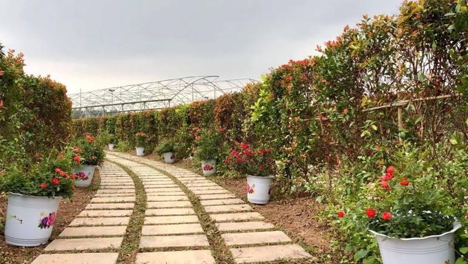 Đường đi trong mê cung được lát đá, có tổng chiều dài 1,8 km. Hai bên đường là những chậu hoa hồng đủ màu sắc.