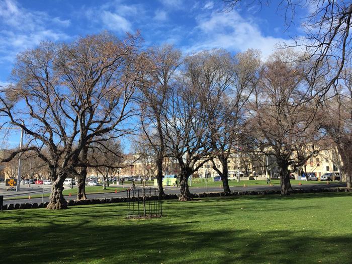 Hàng cây phía trước khu chợ Salamanca