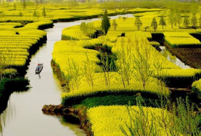 Hưng Hóa, Giang Tô  Hưng Hóa thuộc thành phố Thái Châu, tỉnh Giang Tô sở hữu những hòn đảo hoa cải vàng nổi trên mặt nước. Bạn sẽ được chèo thuyền đi giữa những khóm hoa sặc sỡ vào tháng 4.