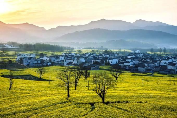 Hoàng Sơn, An Huy  Hoa cải ở Hoàng Sơn tỉnh An Huy phía đông Trung Quốc được trồng ở các thung lũng, làng mạc. Buổi sáng thức dậy, bạn sẽ cảm nhận mùa xuân gõ cửa với ánh bình minh bừng sáng, làn sương mờ ảo, ngắm nhìn màu vàng trải dài, xen kẽ là những ngồi nhà san sát nhau đầy yên bình. Thời điểm thích hợp để tới đây là tháng 3.