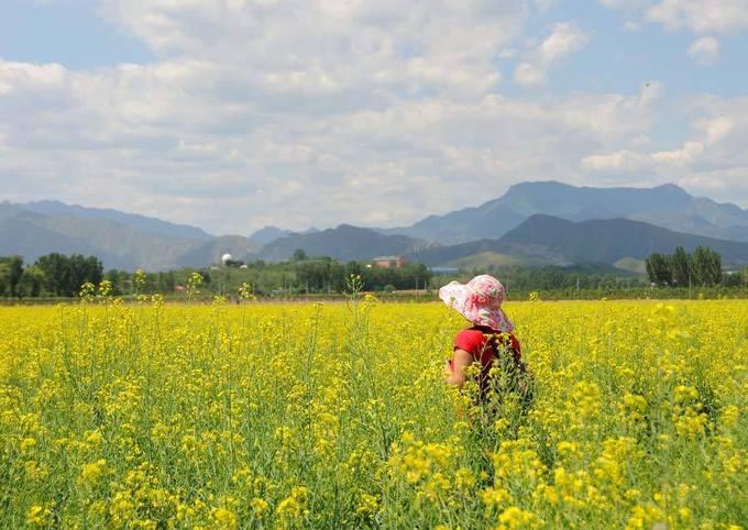 Hải Sơn, Bắc Kinh  Vùng Hải Sơn được mệnh danh là thị trấn nước của Bắc Kinh và cũng là một trong những thiên đường hoa cải của Trung Quốc. Tháng 5 và tháng 6 là khoảng thời gian đẹp nhất để đến với Hải Sơn và chiêm ngưỡng bức tranh hoa cải vàng rực rỡ nhất.