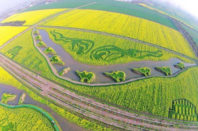 Phụng Hiền, Thượng Hải  Thượng Hải không chỉ có cao ốc hiện đại mà còn có nhiều vùng danh thắng nên thơ. Đến với vùng Phụng Hiền - ngoại thành Thượng Hải, bạn sẽ ngỡ ngàng ngạc nhiên bởi những cánh đồng hoa cải vàng đẹp ngây ngất. Đặc biệt, chúng còn được tạo hình nghệ thuật để thu hút du khách. Hãy đến thưởng ngoạn vẻ đẹp tuyệt mỹ này vào cuối tháng 3 đầu tháng 4 hàng năm.