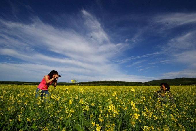 Thành phố Arxan, Nội Mông  Hãy đến với thành phố thuộc khu tự trị Nội Mông vào khoảng tháng 6 - mùa cao điểm hoa cải nở. Bạn có thể lựa chọn nhiều nơi, nhưng có lẽ địa điểm đẹp nhất chính là ở vườn quốc gia nhiệt đới Arxan.