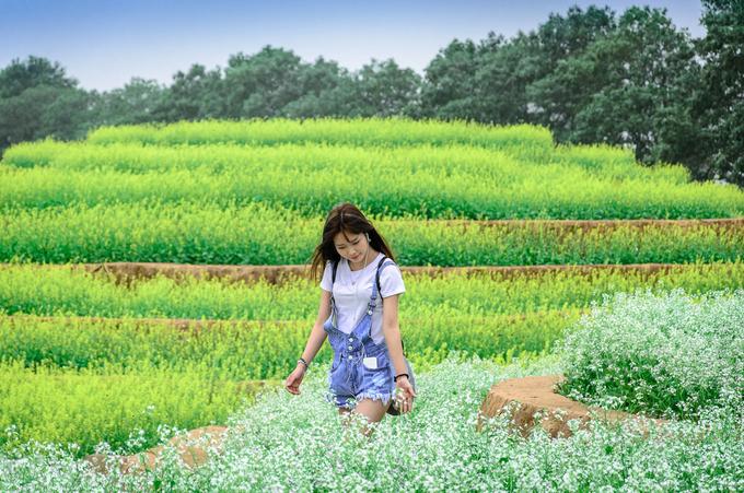 Nếu đi xe riêng, bạn chạy dọc theo quốc lộ 32 đến trung tâm thị trấn Phùng, rẽ phải vào khu đô thị sinh thái Đan Phượng chưa đầy một km sẽ thấy khu vườn này nằm ngay bên tay trái.
