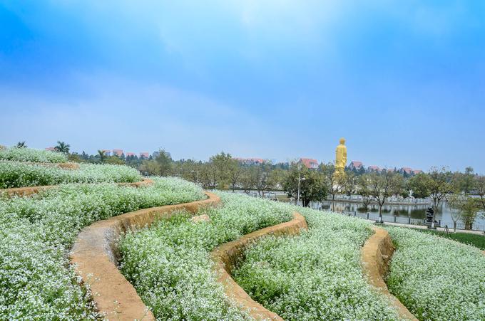Hiện khu sinh thái cũng chuẩn bị trồng một đồi chè để biến đây thành phim trường lớn nhất phía Tây Hà Nội.