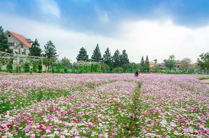 Cánh đồng hoa cánh bướm đủ màu. Nếu đi dạo xung quanh bạn sẽ còn được ngắm hoa ban, hoa vàng anh... Thông được trồng tại các tuyến đường trong khu sinh thái nên đây được ví như Đà Lạt thu nhỏ.