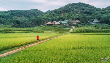 canh-dep-tren-duong-chay-xuyen-rung-pu-luong-ivivu-1