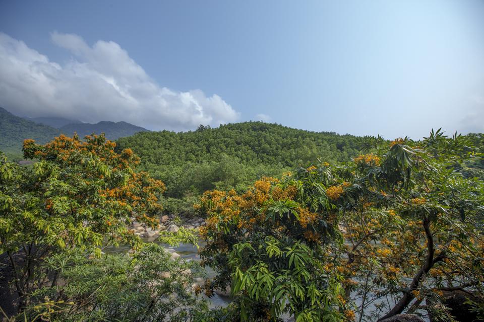 Khung cảnh một góc hoa 'trang rừng'.