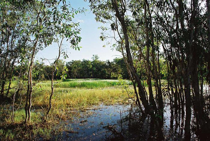 Đầm lầy ở vùng Darwin vẫn như thời hoang sơ