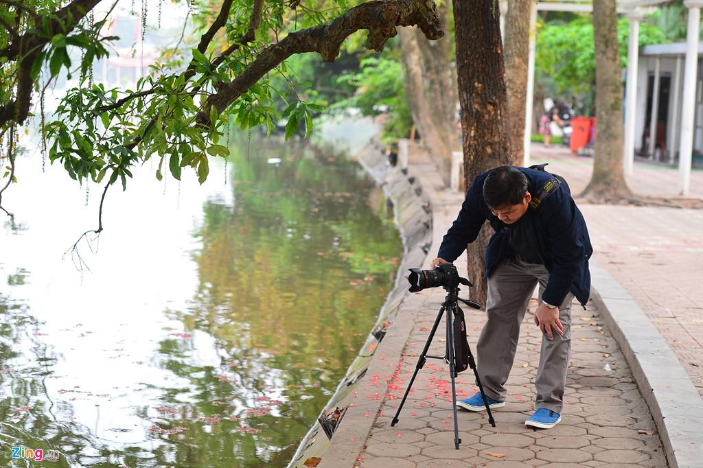 Vài ngày nay, hai cây lộc vừng ven hồ Gươm bắt đầu nở hoa, thu hút nhiều nhiếp ảnh gia tới sáng tác.
