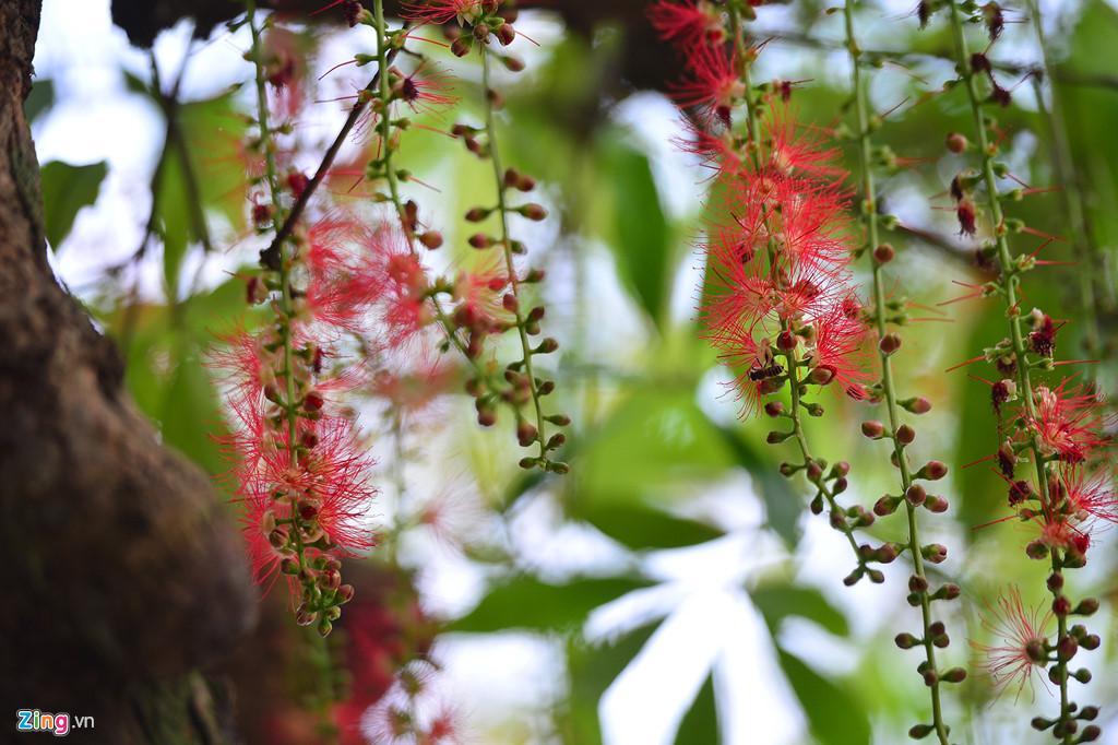 Nếu đưa lên mũi ngửi, bạn sẽ thấy mùi hoa thơm thoang thoảng lạ lạ, không nồng, không ngát chỉ thanh thanh vừa đủ.