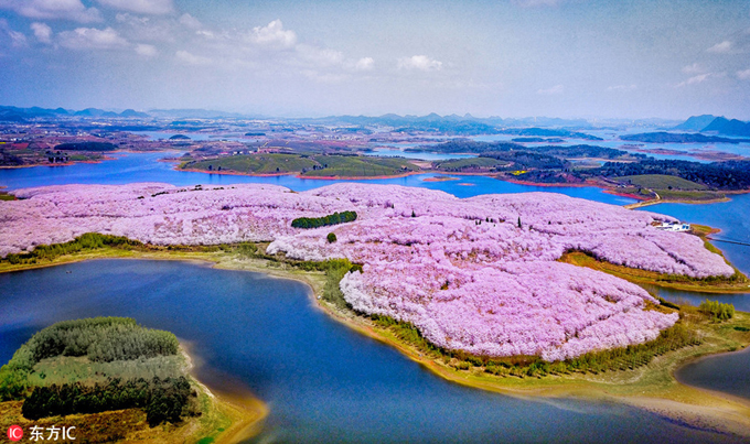 Nông trại Pingba nằm ở phía Tây Nam thành phố Quý Dương, rộng 1.600 ha. Phần lớn diện tích dùng để trồng các loại hoa, trong đó nhiều nhất là hoa anh đào. Hoa được trồng bạt ngàn, phủ khắp các hòn đảo nhỏ, xen kẽ với diện tích trồng cỏ, hoa cải vàng.