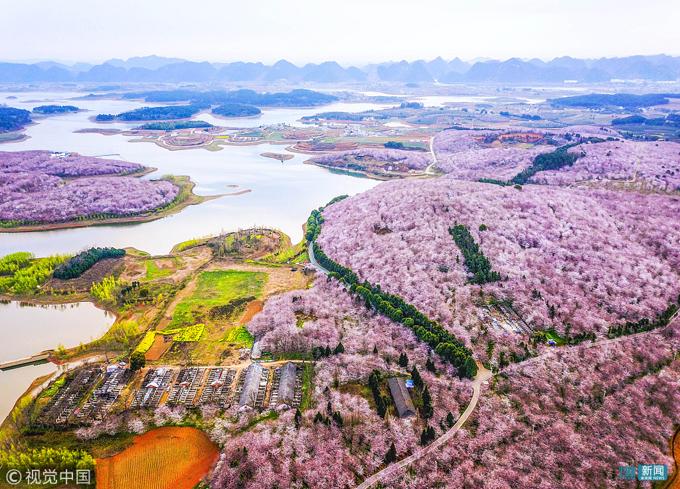 Quý Châu là tỉnh có diện tích núi đồi khá lớn, nằm ở phía Nam Trung Quốc, không phát triển kinh tế mạnh. Do đó, sự ra đời của nông trại Pingba đã kéo một lượng lớn khách du lịch về đây, thúc đẩy ngành công nghiệp không khói của địa phương.