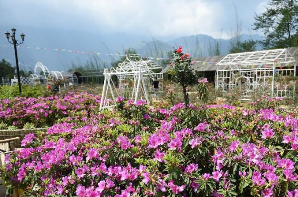 Lễ hội hoa Đỗ Quyên - Không gian văn hóa Tây Bắc năm nay trùng với thời điểm Sun World Fansipan Legend triển khai chương trình ưu đãi giá vé cáp treo và tàu hỏa leo núi Mường Hoa lên đến 70% cho người dân sáu tỉnh Tây Bắc.an-ivivu-12