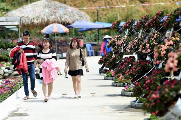 Ngay từ khi bước chân tới quảng trường ga đi cáp treo Fansipan, du khách đã được chiêm ngưỡng sắc màu hoa đỗ quyên. Những chậu đỗ quyên kết thành tiểu cảnh xinh xắn với sắc đỏ, hồng.