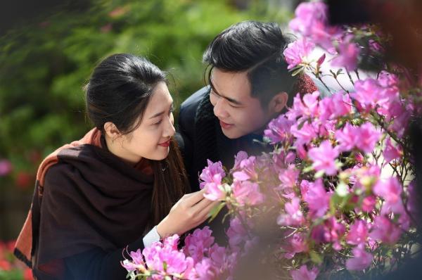 Với nhiều du khách Việt, hoa đỗ quyên không xa lạ nhưng hiếm nơi nào lại có nhiều đỗ quyên rừng đẹp như tại Fansipan. Minh Trung - một du khách trẻ đến từ Nam Định cho biết anh không nghĩ đỗ quyên rừng lại nhiều như vậy ở Fansipan.