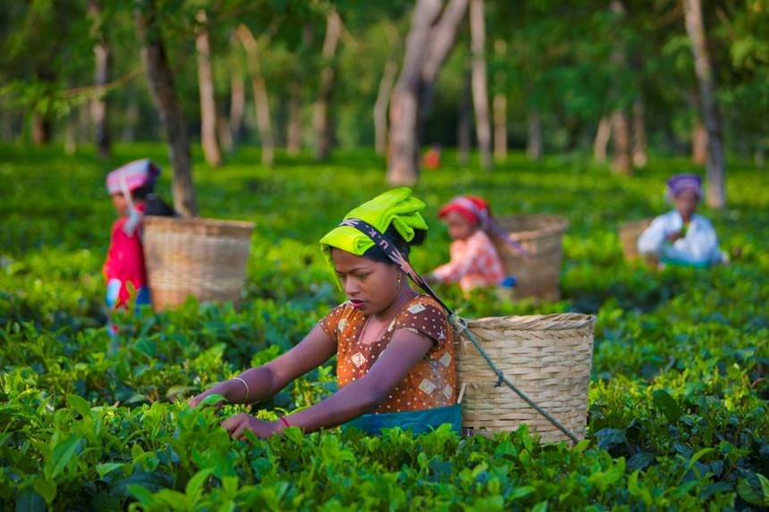 """Assam, Ấn Độ: Assam nằm ở phía đông bắc Ấn Độ và là vùng sản xuất trà lớn nhất cả nước, mỗi năm cung cấp 60% tổng lượng trà của cả Ấn Độ. Đa số đồn điền trà rộng lớn ở đây đều nằm ở khu vực thung lũng Brahmaputra, trong đó, Jorhat nằm ở trung tâm của thung lũng, còn được gọi là """"Thủ đô trà của thế giới"""". Ảnh: Getty."""