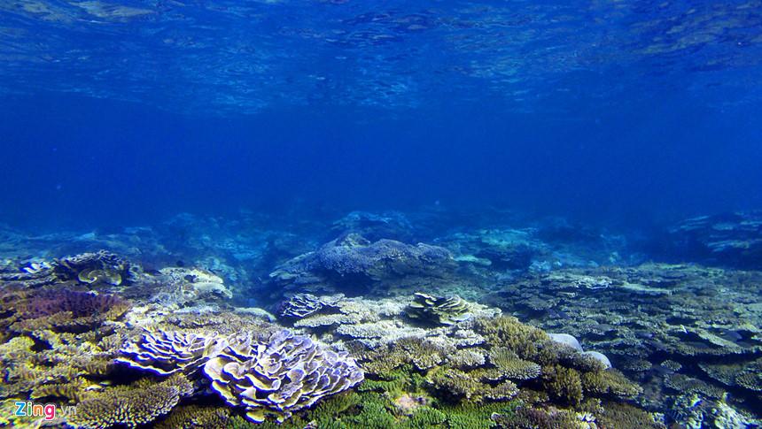 """""""Từng lặn ngắm san hô ở nhiều vùng biển cả nước nhưng tôi thật sự bất ngờ vì dải san hô ở Gành Yến ở vùng gần bờ còn nguyên sơ, muôn sắc màu tuyệt đẹp. San hô nở trông giống cánh đồng bắp cải nơi đây đã mê hoặc chúng tôi"""", chị Trà thổ lộ."""