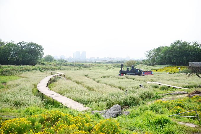 Vườn hoa tam giác mạch nằm cách trung tâm Hà Nội khoảng 7 km, rộng hơn 5.000 m2. Hoa thường mọc ở Tây Bắc nên khi xuất hiện ở thủ đô nhanh chóng thu hút sự quan tâm của người dân và du khách.