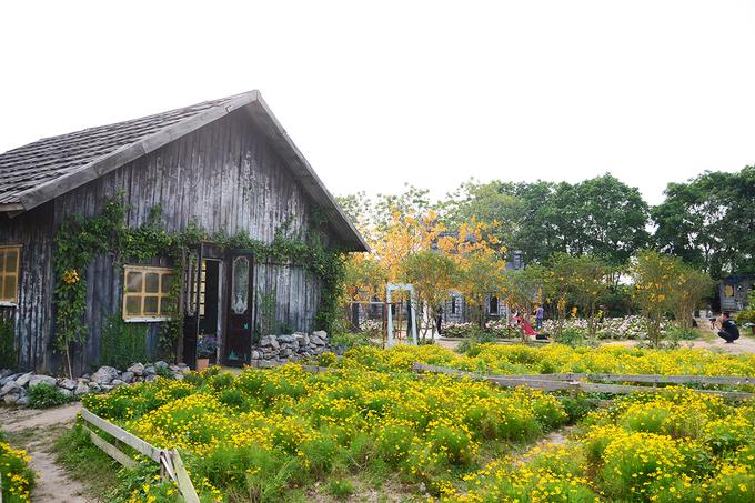 Ngoài tam giác mạch, vườn còn có các loài hoa cánh bướm, phăng-xê tím, hoa thạch thảo được trồng xen kẽ.