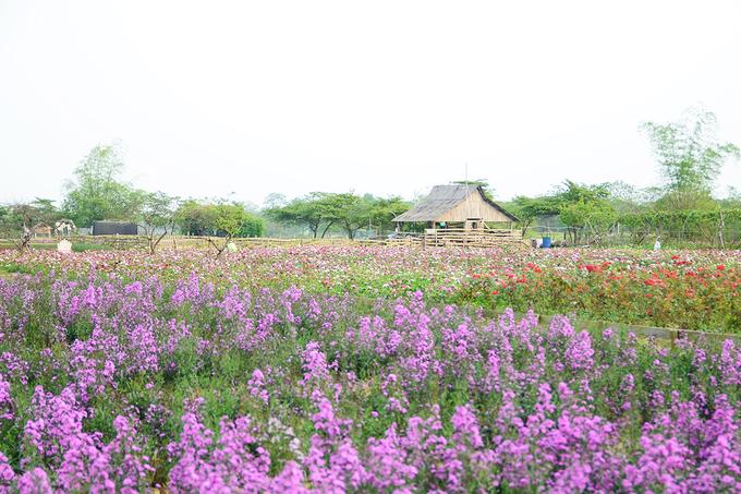 Nhiều tiểu cảnh như ga tàu, ghế, xích đu... được bố trí ngay bên trong vườn hoa đem lại cho du khách nhiều sự lựa chọn hơn để chụp ảnh.