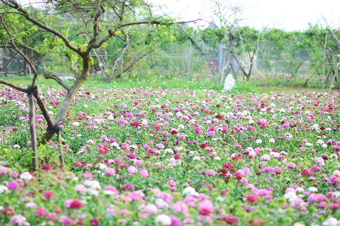 Vườn hoa hiện thu hút đông đảo giới trẻ đến tham quan, sinh viên chụp hình kỷ yếu lẫn các cặp đôi chụp ảnh cưới.