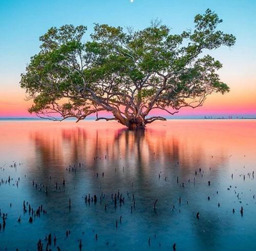 Bờ biển Nudgee, Brisbane  Ở Brisbane, nếu bạn muốn tìm một nơi để ngắm hoàng hôn gần trung tâm thành phố, có lẽ không đâu lý tưởng hơn bờ biển Nudgee. Hãy kiên nhẫn chờ đợi để ngắm nhìn ánh nắng vàng rực chiếu xuống, tạo nên những sắc màu rực rỡ và hình ảnh ngoạn mục của những cây rừng ngập mặn phản chiếu từ mặt nước.