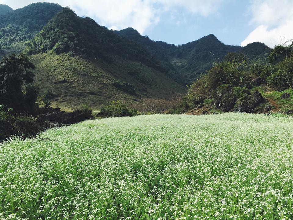 Mộc Châu: Là một cao nguyên rộng lớn thuộc tỉnh Sơn La, Mộc Châu được nhiều người gọi là thảo nguyên hoa bởi các cánh đồng hoa trải dài hết tầm mắt với đủ loại như hoa ban, hoa mận, hoa dã quỳ, hoa cải trắng… Cùng với các cánh đồng hoa và các đồi chè, đồng cỏ, du khách đến Mộc Châu còn có vô vàn lựa chọn như thăm thác Dải Yếm, rừng thông Bản Áng, hang Dơi. Thêm vào đó, khí hậu mát mẻ ở Mộc Châu cũng là một điểm cộng tuyệt vời để tránh thời tiết oi bức của mùa hè. Ảnh: Facebook Hoàng Dung.