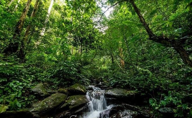Pù Mát: Nằm trên địa bàn huyện Con Cuông, vườn quốc gia Pù Mát được công nhận là vùng lõi của khu dự trữ sinh quyển miền Tây Nghệ An do UNESCO công nhận năm 2007. Đến đây, du khách không thể bỏ qua những thắng cảnh như thác Khe Kèm, hang Ốc, bãi Mỏ Vịt; tản bộ trong rừng săng lẻ, rừng cây lùn...; lênh đênh trên con thuyền mộc mạc ngược dòng sông Giăng. Về ẩm thực, bạn có thể thưởng thức các món ăn đặc trưng của người Thái ở bản Nưa trong những homestay mang đậm chất núi rừng. Ảnh: Baolaodong.com.